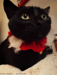 Christmas Cat by sarah-mackie
