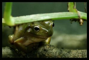 frog: kiss me by morho