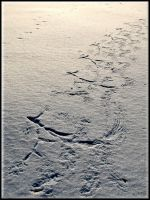 A footprints in the snow... by Yancis