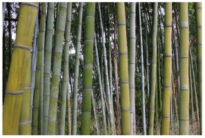 Bamboo Forest 2013 by CrystalMarineGallery