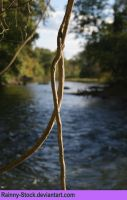 Vines and river- STOCK by Rainny-Stock
