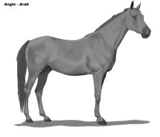Anglo Arabian by Project-Dream