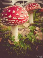 Mushrooms Fungi by Muggi93