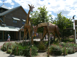 Denver Zoo - Giraffe sculpture by VGJustice