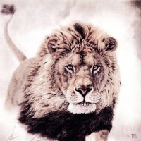 Lion of Judah by illustraTou