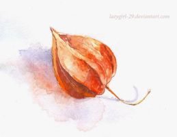 cape gooseberry by lazygirl-29