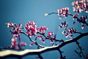 Touch of Spring by JFroi