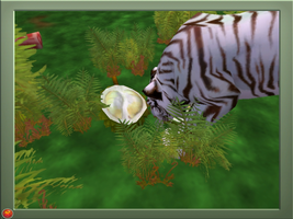 Zoo Tycoon 2, White Tiger by Tornadic-Hedgehog