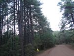 DIRT ROAD IN THE WOODS by ShellSys10101
