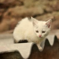 Tiny kitten , such a big world by FairyCat60s