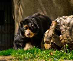 Andean 'Bespeckled' Bear by Noble-Kenshi