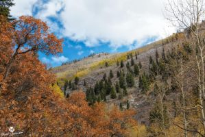 Between the Oak and the Aspen  by mjohanson