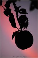 Apple by brijome