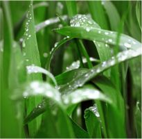 dew by illiyana