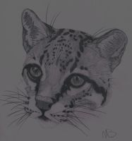 Ocelot by The-Ushi-Artist