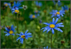 Flores azules by Ninaquilla