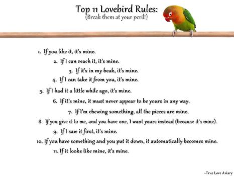 Lovebird Rules 2 by JRigh