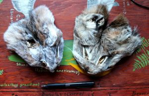 Two lynx faces for barter by lupagreenwolf