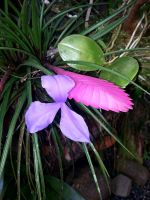 pink and purple flowers by Caramanos2000