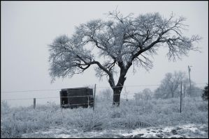 Snow Day 1 by LovelyBPhotography