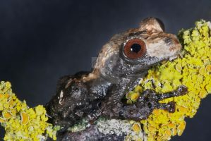 Bird s__t frog by AngiWallace
