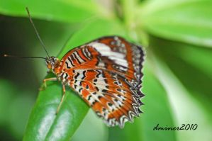 Butterfly at melb zoo 1 by DanielleMiner