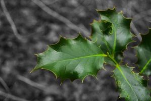 Green Winter Leaves by ShaunStarrr