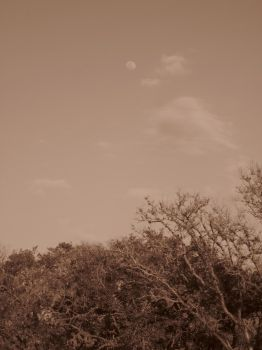 moony sepia sky by pickurupper