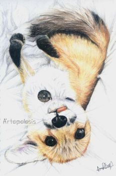 Cute fox by Anna655