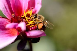 Busy Bee by Caitiekabob