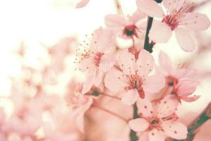 Blossoms by kayleighmc