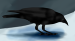 Crow by cynderplayer