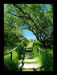 Green Stairs by xtuv