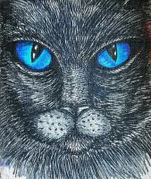 Cat Face Blue Eyes  by PaniaBrown