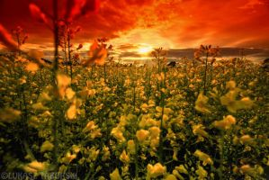 field of the sun by photo-earth