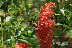 Butterfly And Red Flowers [SHOT 1] by pfgun0