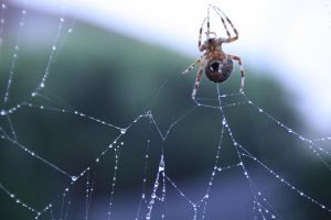 just a spider on a web... by xbr0kendevotion