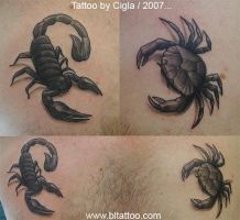 Crab and Scorpio by cigla