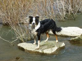 Handsome Dog on a Rock by the-only-nighthawk