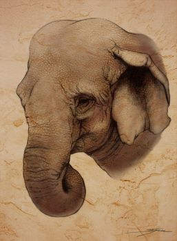 Indian Elephant by Eenuh