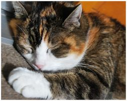 Our Cat 2 by Astrantia01