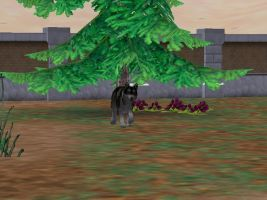 Zoo Tycoon2: Tsume by Caneage