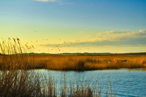Birds over water by Tumana-stock