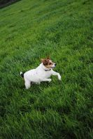 JACKrussle by AK-HUNTER74