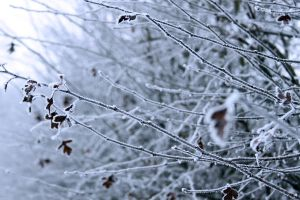 Frosted Twigs by LoopMarine
