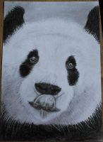 Panda pencil and charcoal drawing by Anbeads