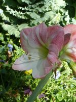 Beautiful flower by Oxis