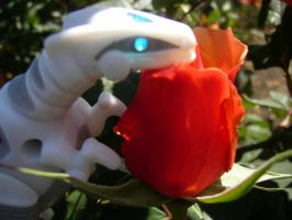 Robo and a Rose 3 by DragonarySilver