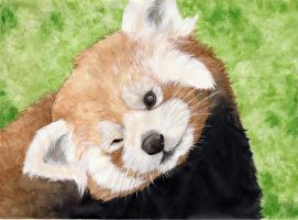 Lesser Panda by LadyTinuz