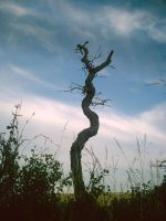 A Very Lonely Tree by LxTrix